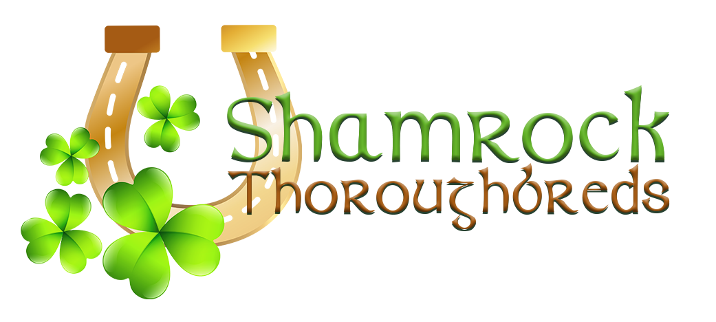 Shamrock Thoroughbreds Logo